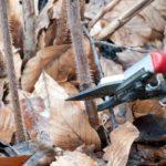 Как правильно обрезать малину осенью - советы для начинающих в картинках