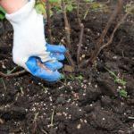 Подкормка малины осенью - чем лучше подкормить после сбора урожая